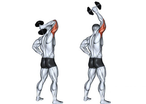 жим гантели из за головы мышцы