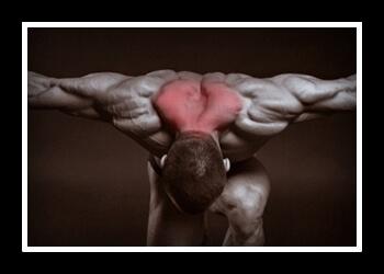 Трапеция мышца фото