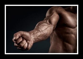 Мышцы предплечья фото