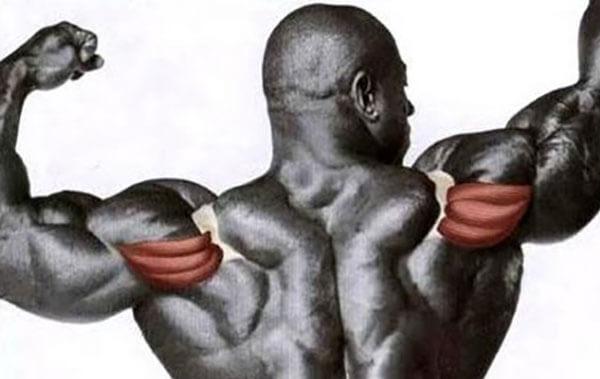 Задняя дельта плеча фото