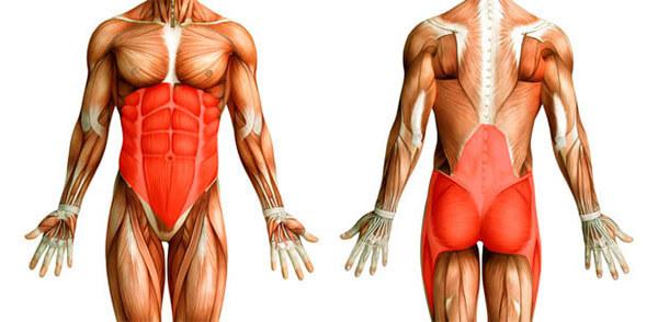 Мышцы стабилизаторы позвоночника