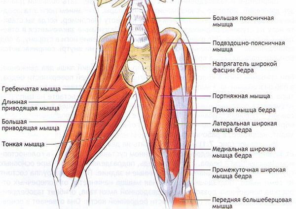 Мышцы стабилизаторы тазового и коленных суставов