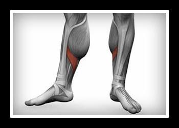 Камбаловидная мышца голени: где находится и как накачать