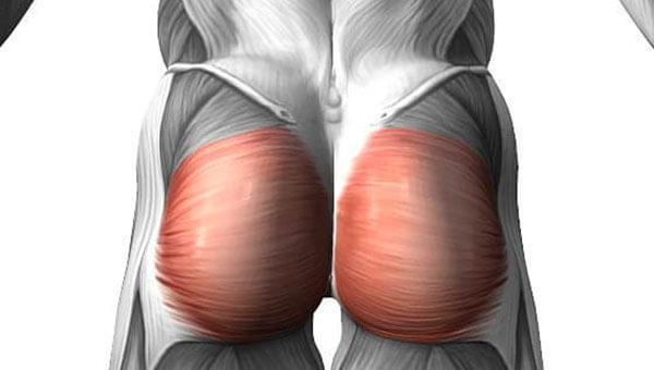 Большая ягодичная мышца строение