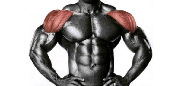 Дельтовидные мышцы фото