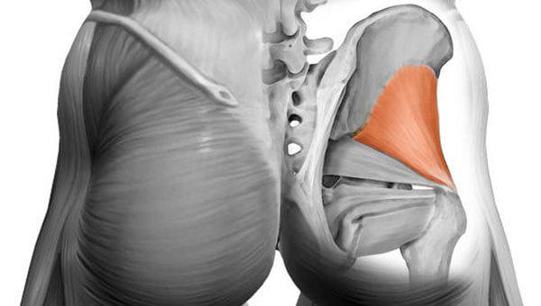 Малая ягодичная мышца строение