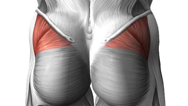 Средняя ягодичная мышца строение