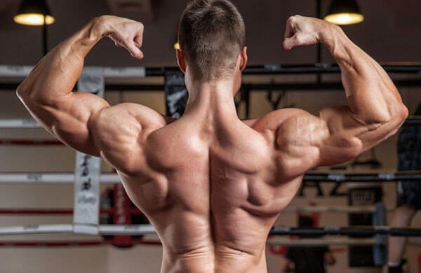 Мышцы спины фото