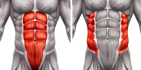 Мышцы пресса фото
