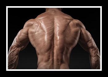 Широчайшая мышца фото