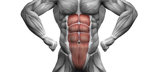 Анатомия и строение мышц живота