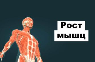 Рост мышц: фото.