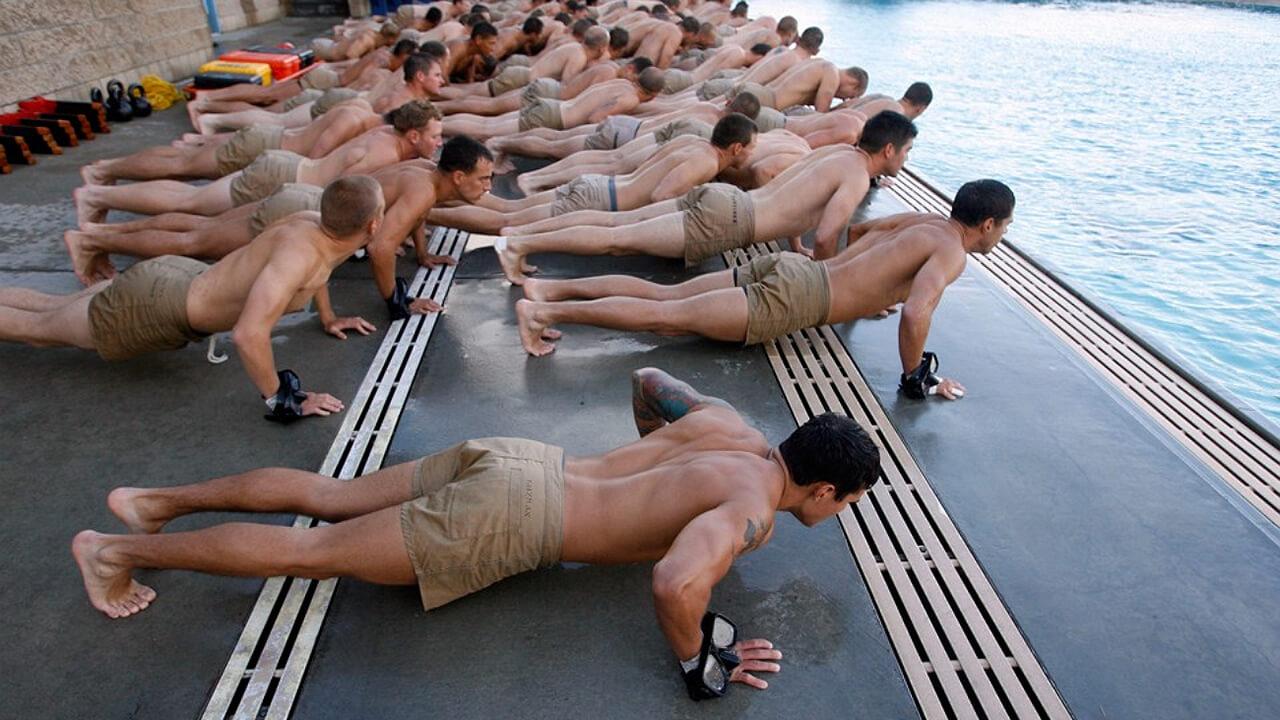 Отжимания морских котиков.