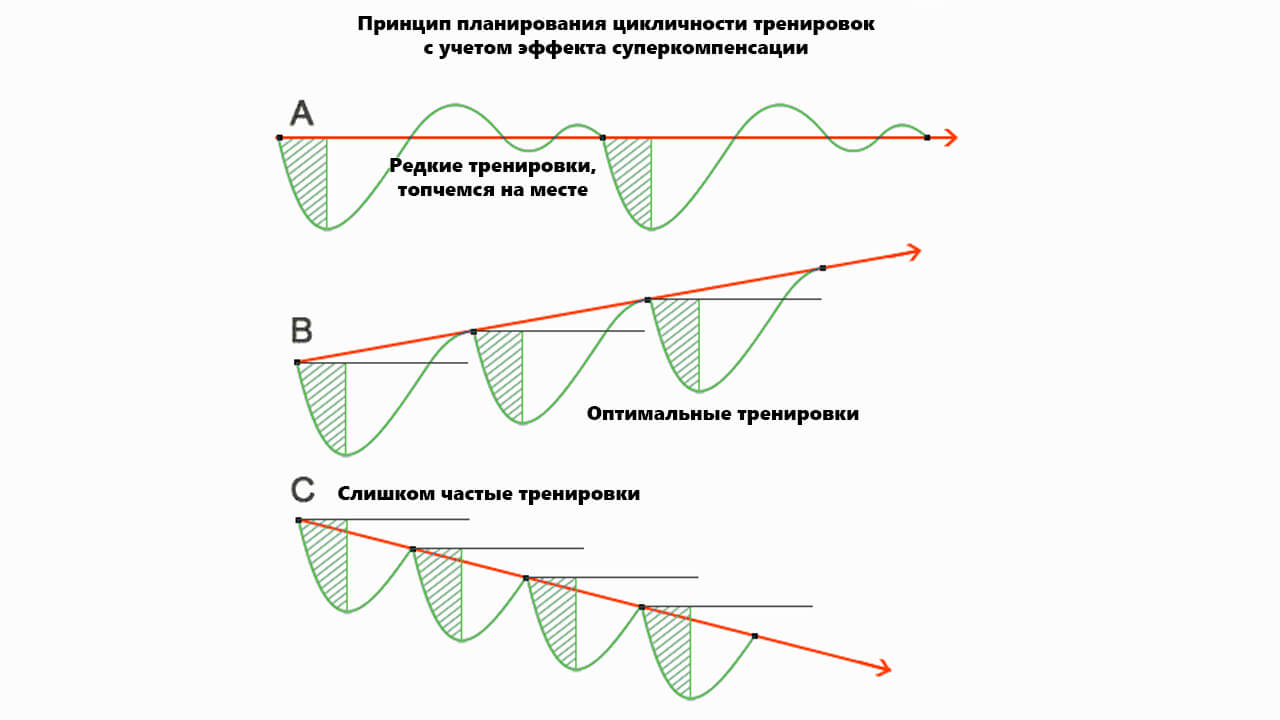 Принцип суперкомпенсации: схема.
